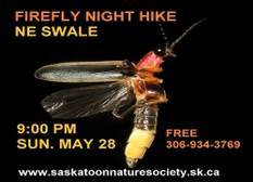 Firefly Night Hike