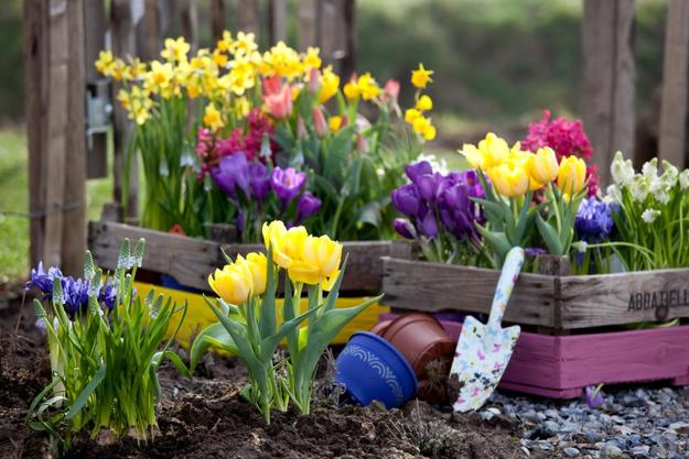 Eager Green Thumb Spring Gardening Tips For Sask Climate Slade